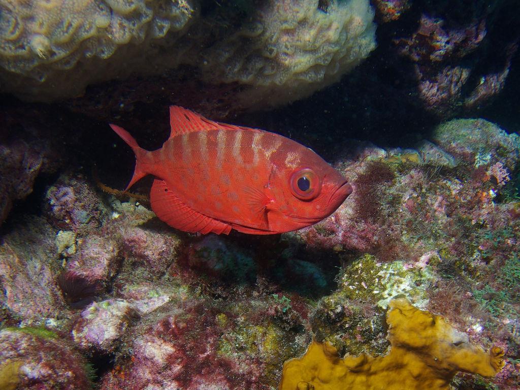 Een kleurrijk onderwaterwereld rondom Kaapverdië - Snorkelen in Kaapverdië