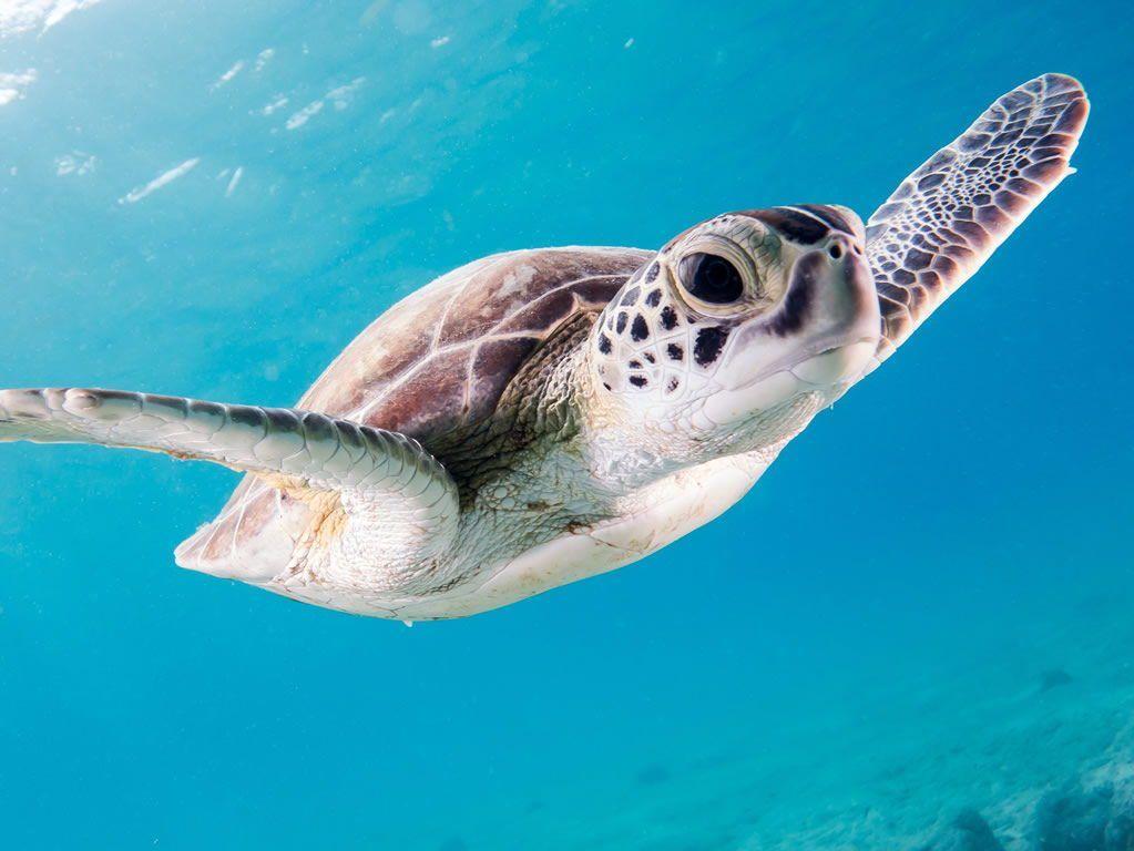 Schildpadden in Kaapverdië