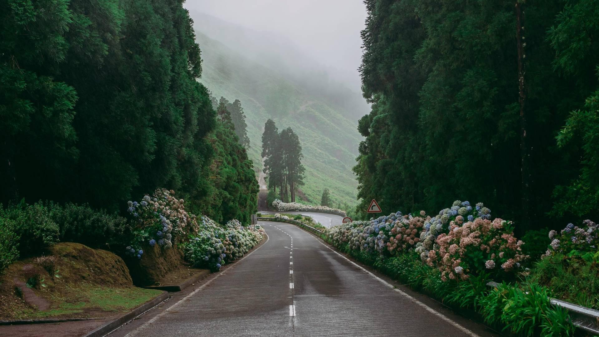 Hortensia's langs een autoweg op Flores, de Azoren