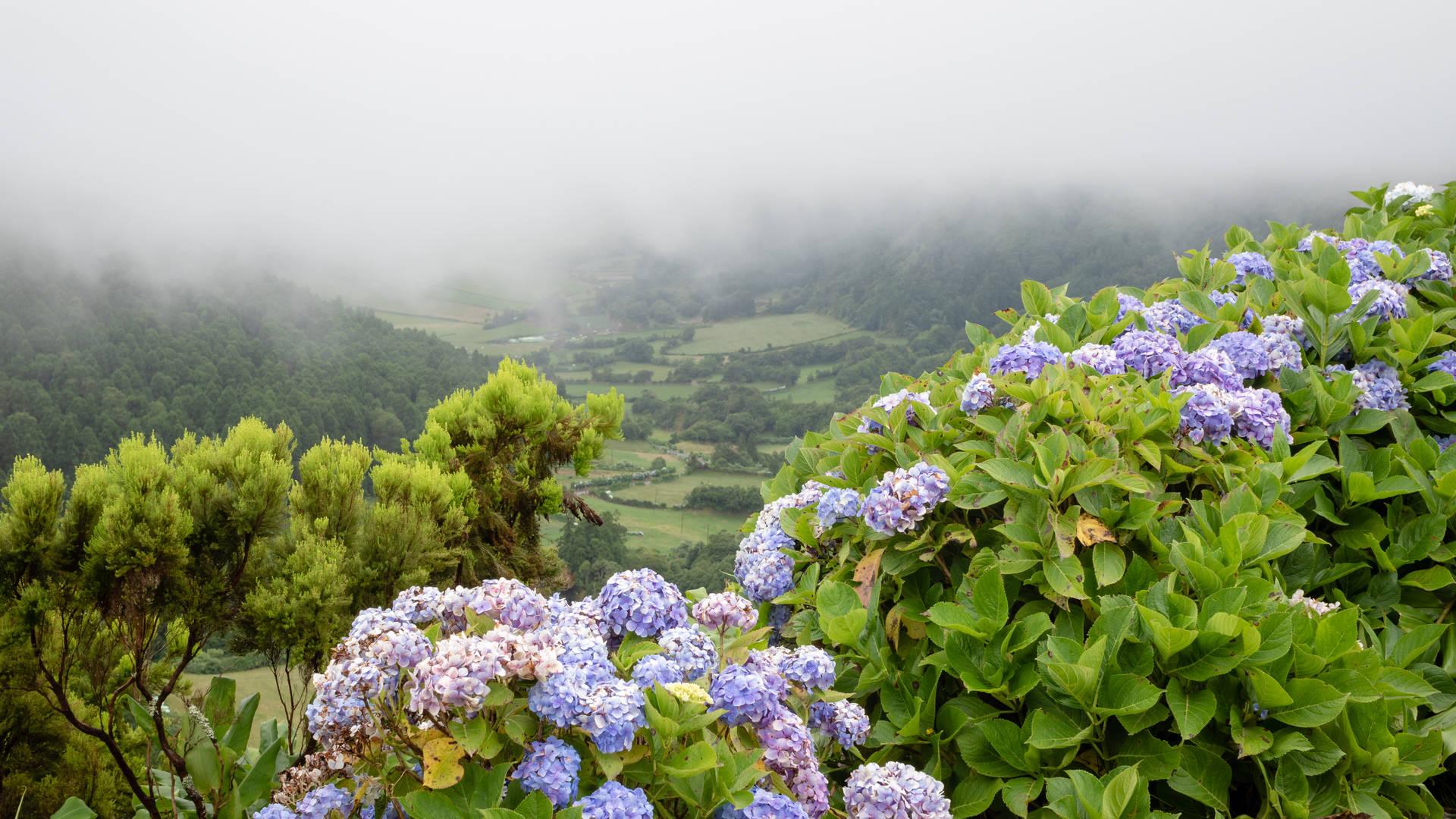 Bloemen Azoren