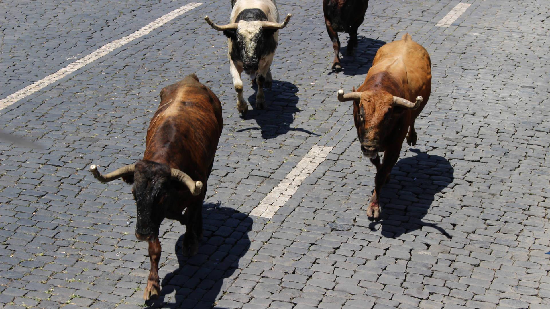 Stierenrennen op het eiland Terceira