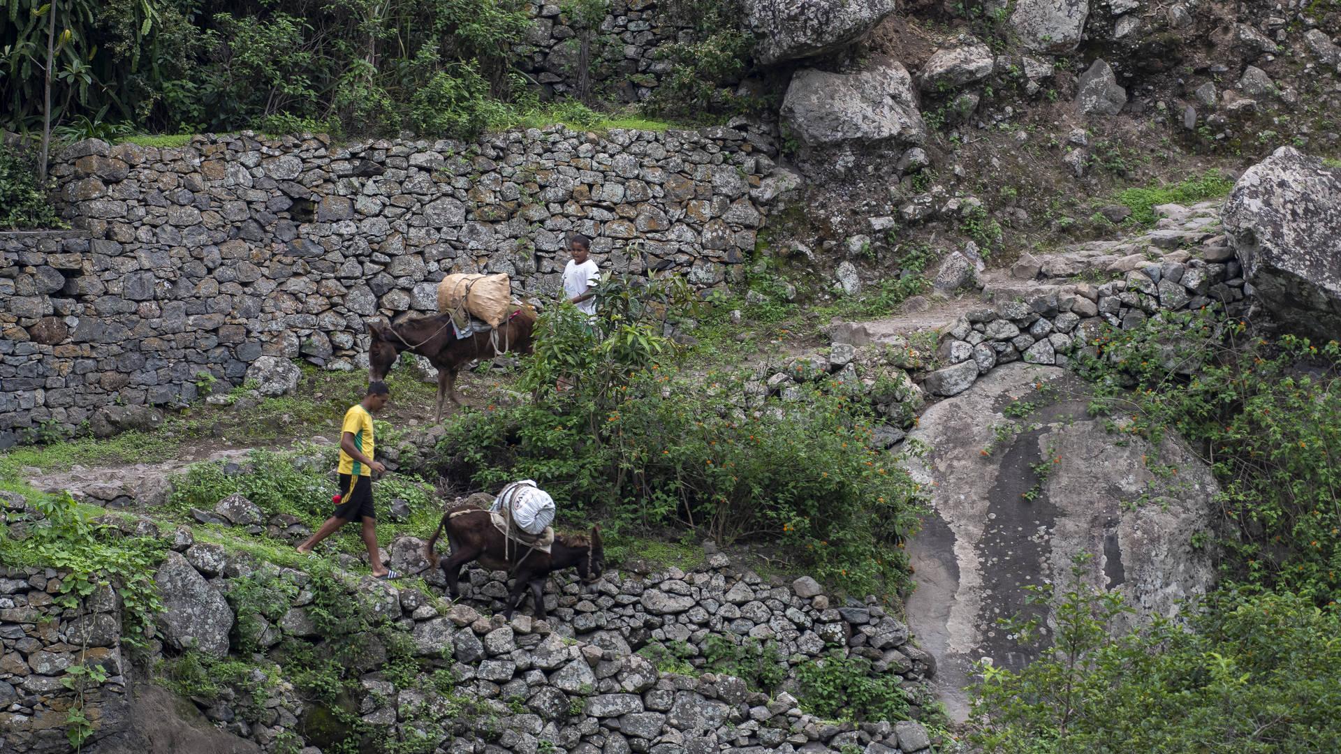 wandelingen santo antao ezels