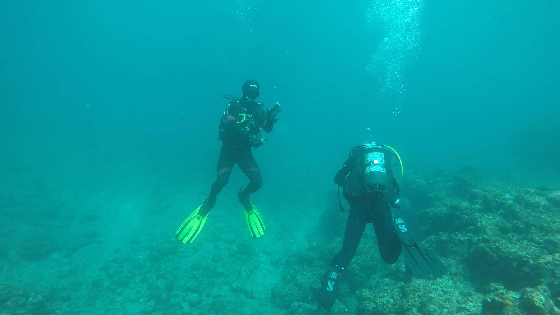 duiken voor de kust van Sal - Duiken in Kaapverdië - activiteiten