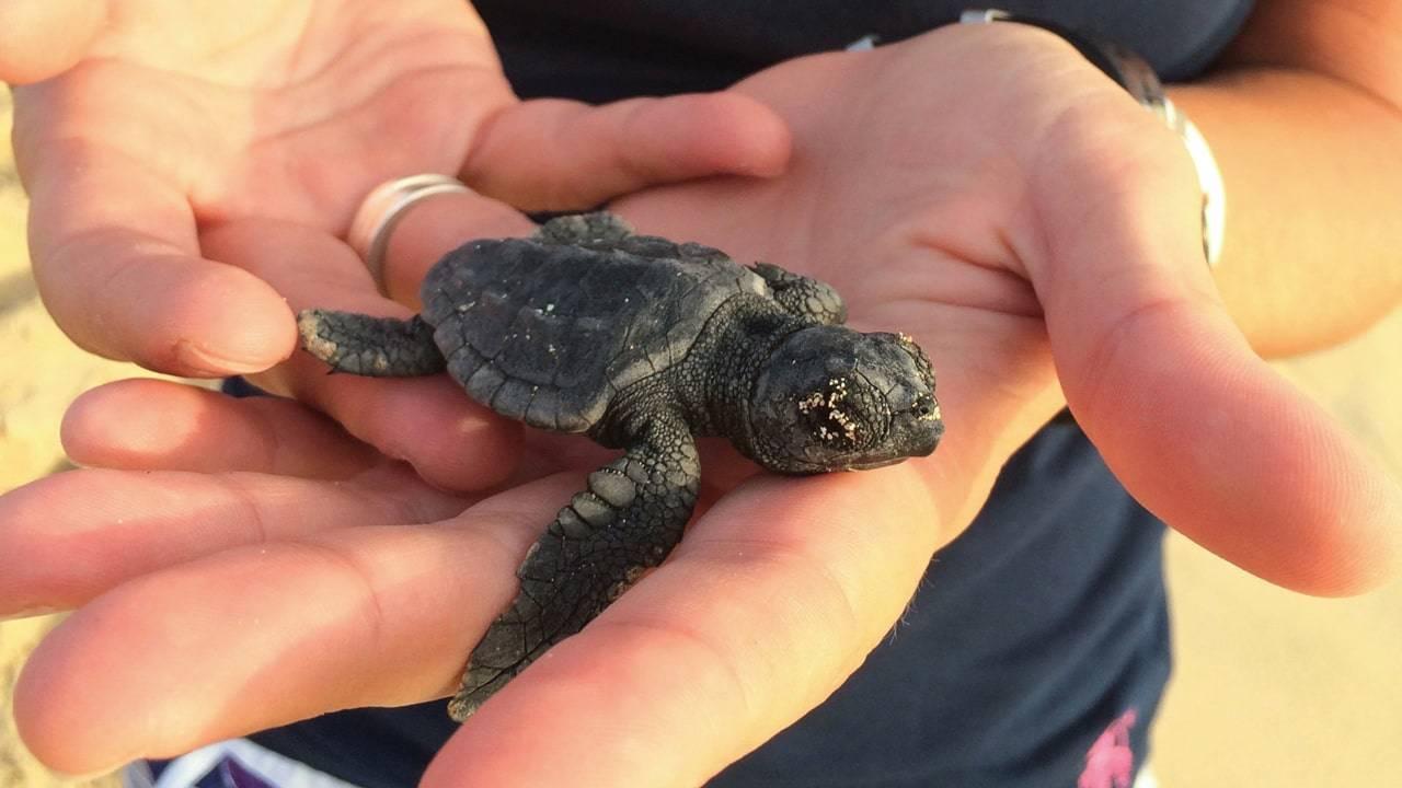 Natuur in Kaapverdië schildpad - wat te doen in Kaapverdie