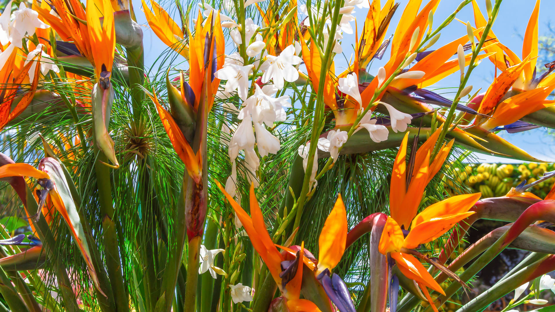 bloemen in madeira