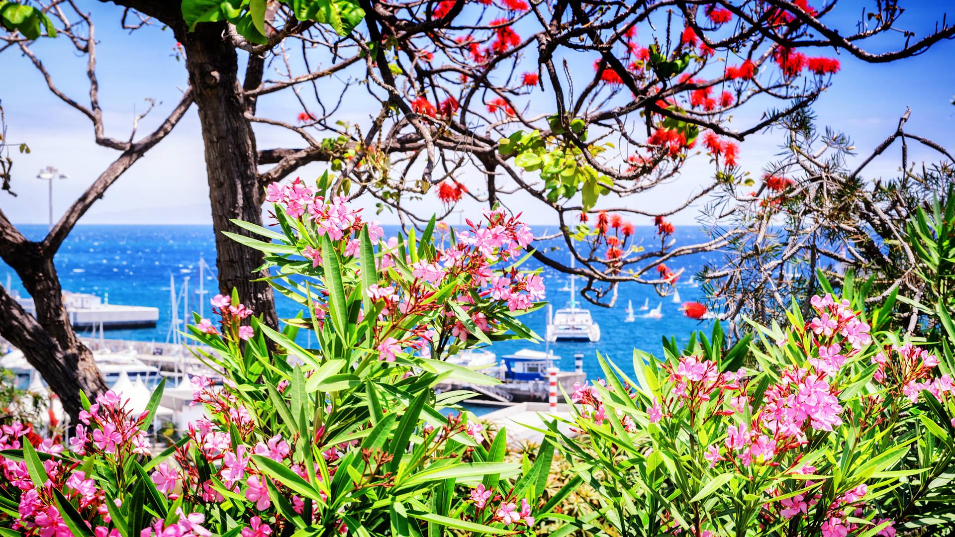weer madeira bloemen zonnig