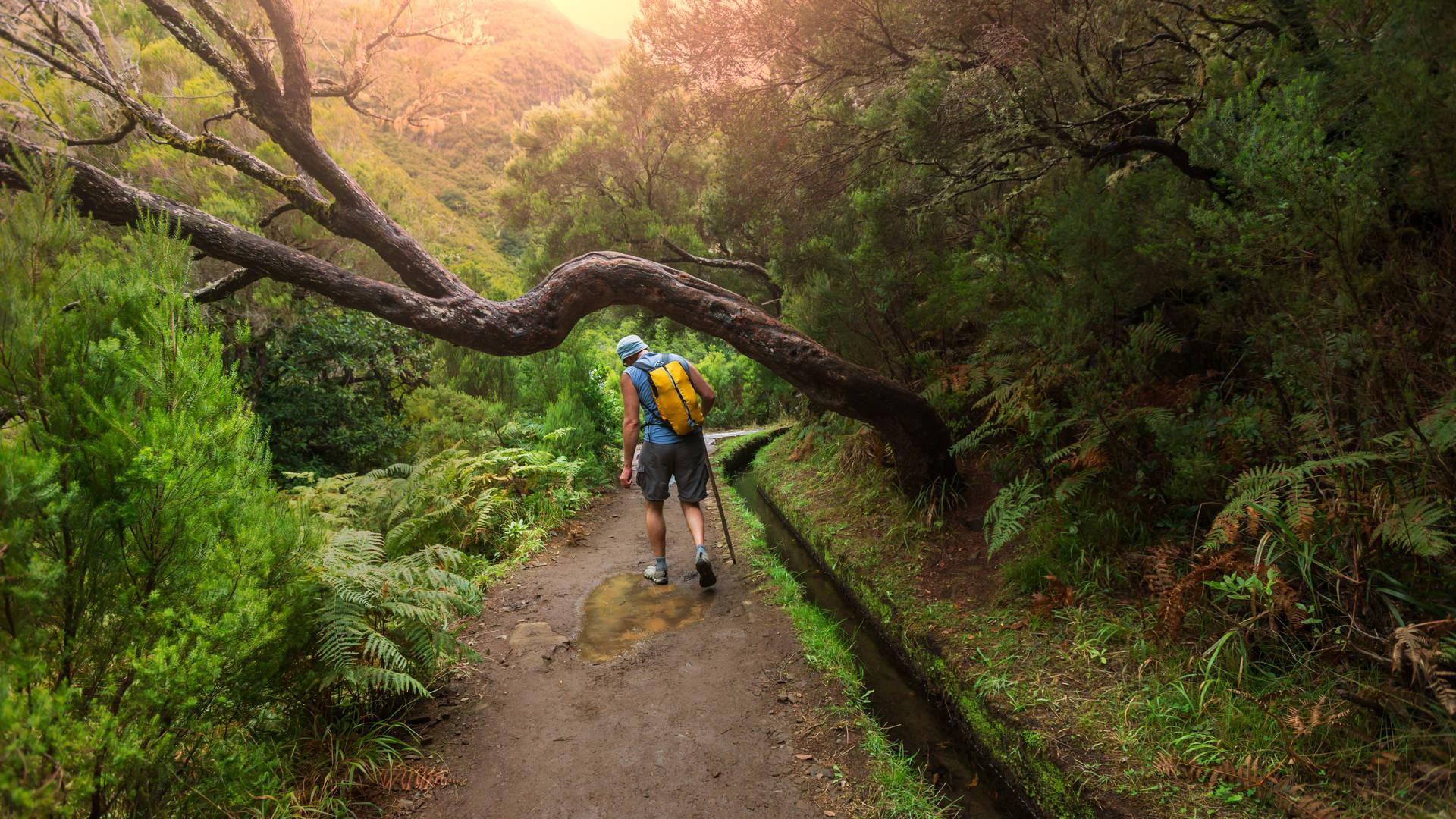 wandelen door de groene landschappen van Madeira