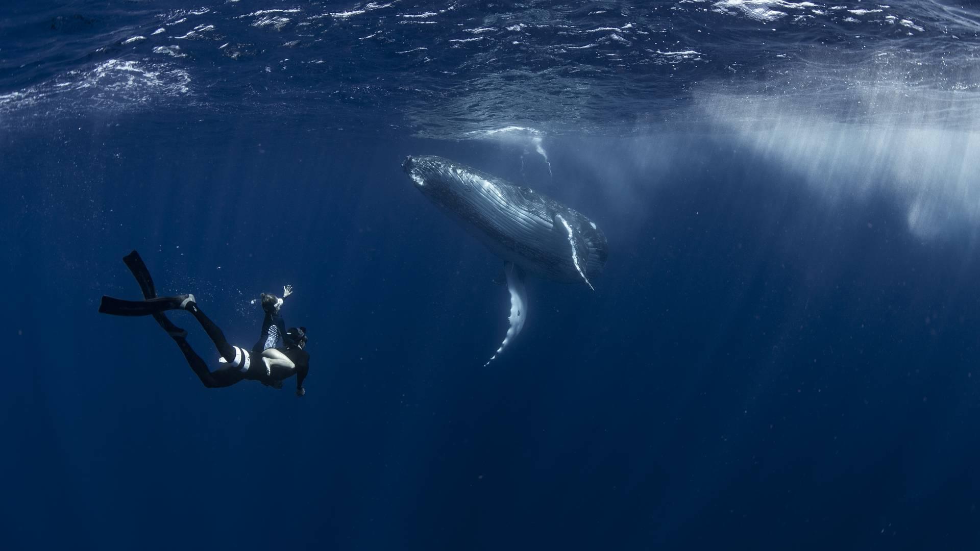 ontmoeting tussen mens en walvis