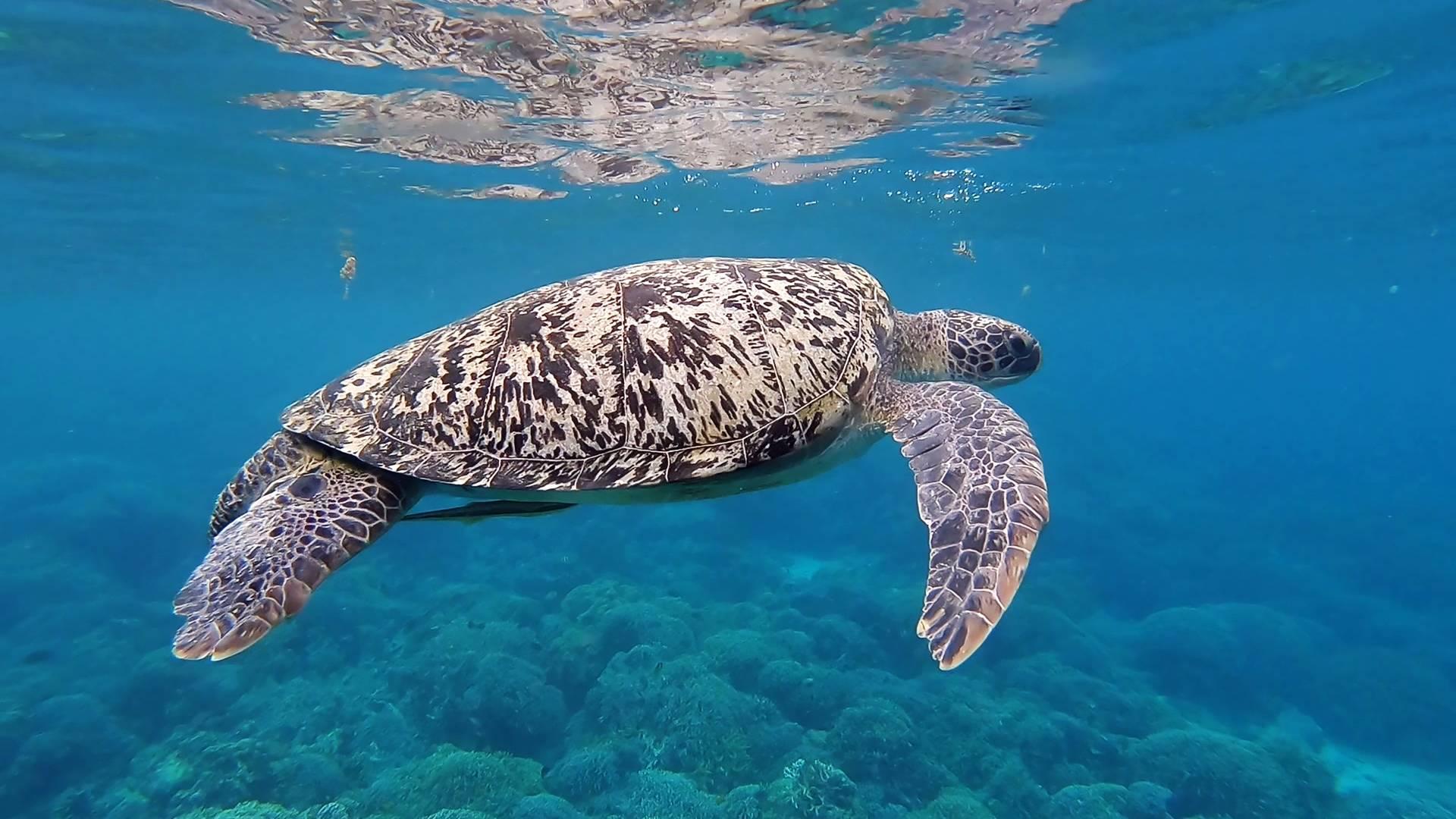 Zeeschildpad voor de kust van Sal - Duiken in Kaapverdië